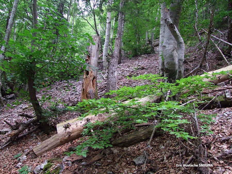 Photo du sous bois du bois du Chapitre