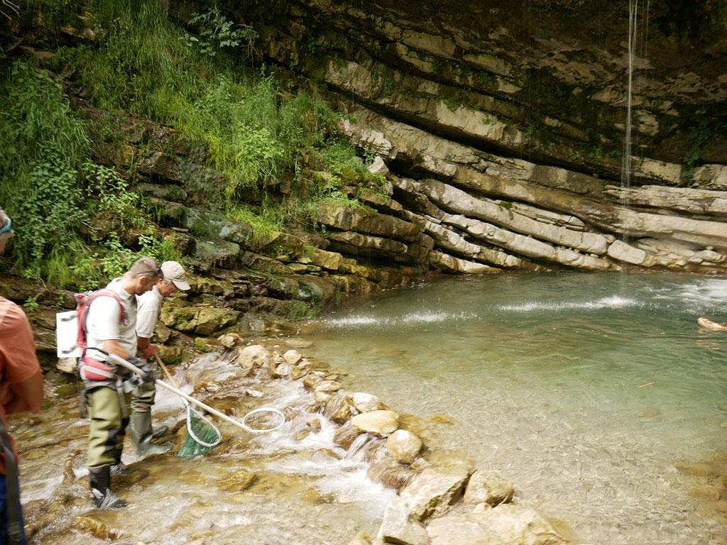 Sur le canyon de Rabou, deux agents de l'OFB pratiquent une pêche électrique de démonstration à l'aval d'une cascade